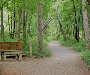 Bench and trail at Wilderness Center by John Lorson